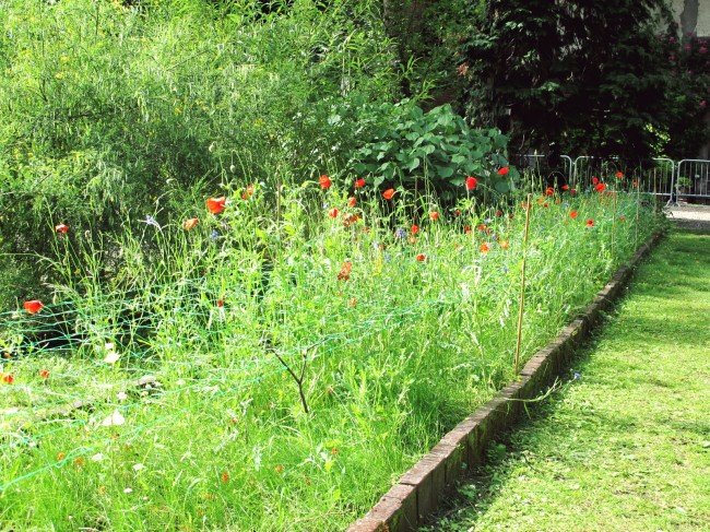 jardin botanique brera
