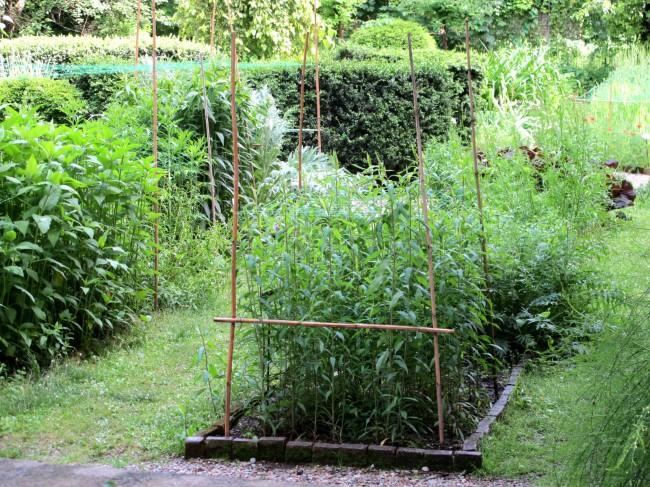 jardin botanique de brera milan