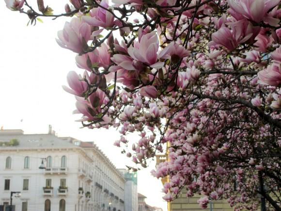 magnolia piazza tommaso milano