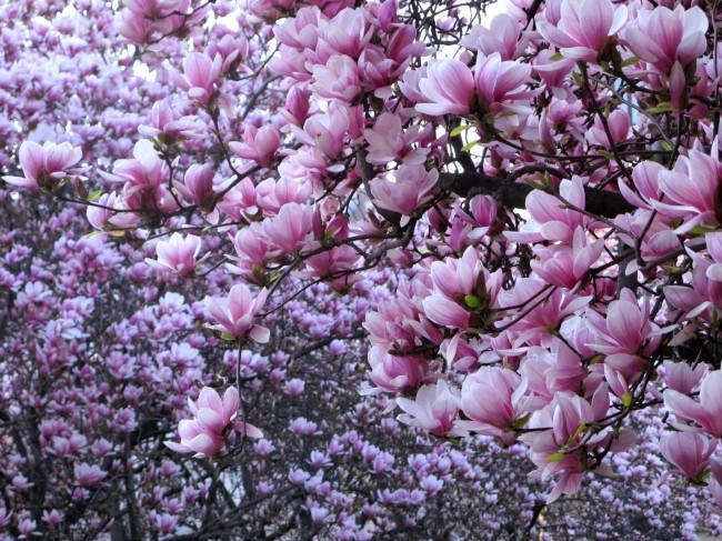fleurs à milan