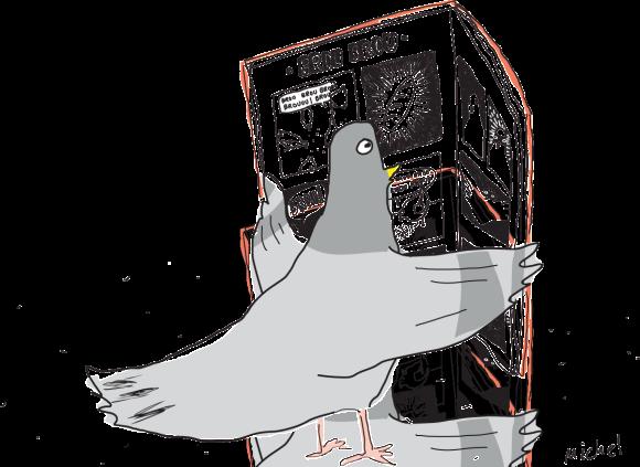 pigeon livre