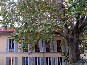 plus bel arbre milan