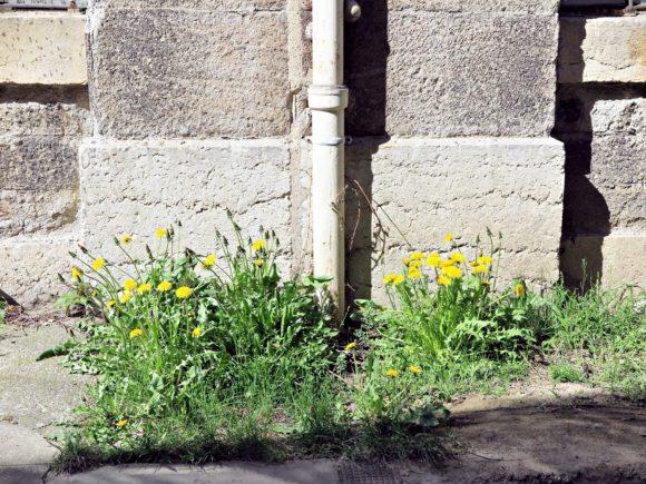 fleurs en ville