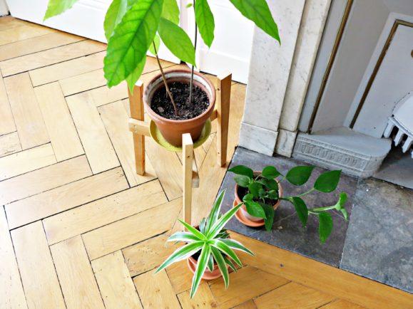 appartement plantes vertes
