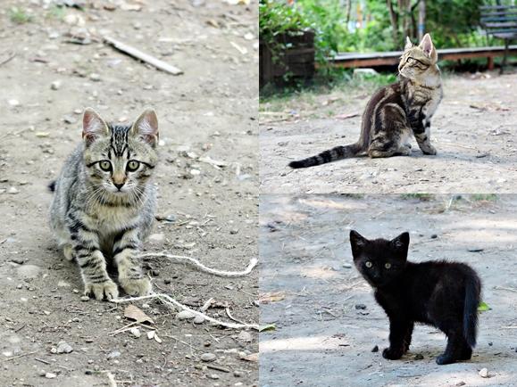 chatons mignons jardin
