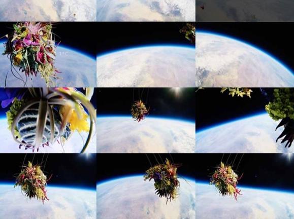 fleurs dans l'espace
