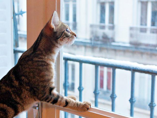 chat regardant neige
