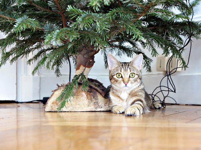 chat d'appartement