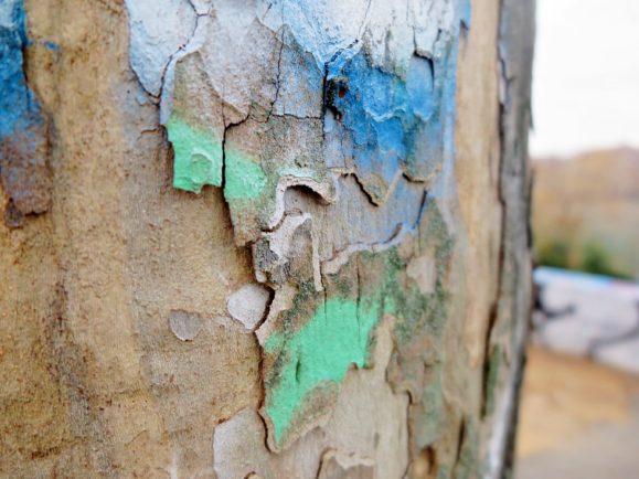 traces écorces platane