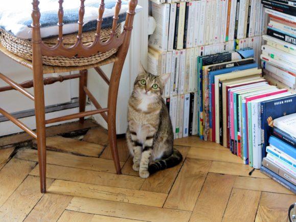 chat livres