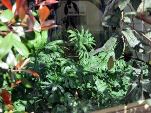 vitrine plantes vertes