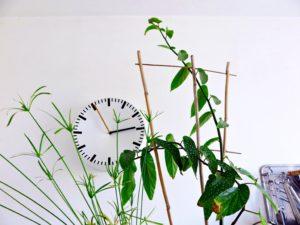 horloge murale analog hay