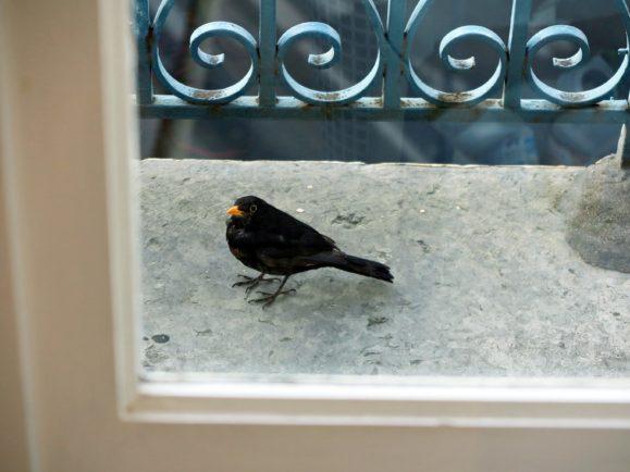 oiseau du balcon