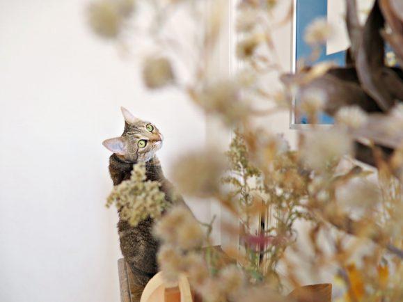 chat fleurs séchées